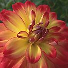 Delicious Dahlia by Monnie Ryan
