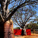 Boabs and red fence by Robyn Lakeman