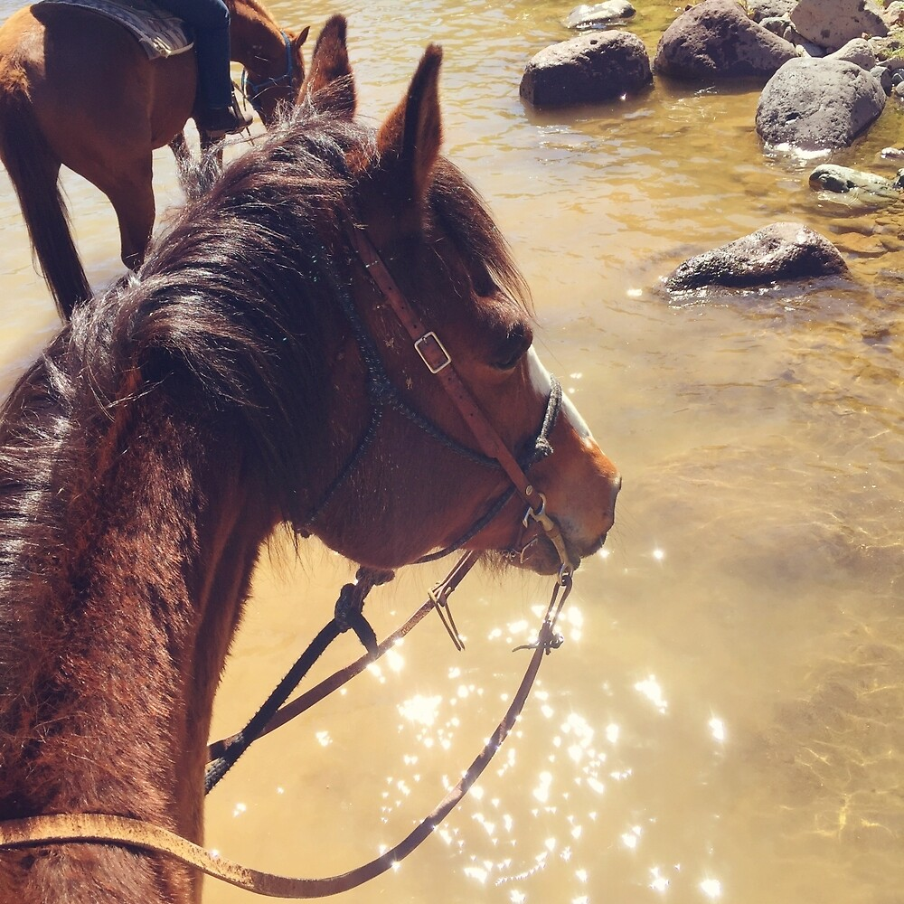 Horse Walking Through Water by Christina B