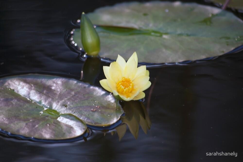 Longwood Gardens - Spring Series 35 by sarahshanely