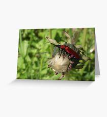 Pyrrhidium sanguineum_Longhorn Beetle Greeting Card