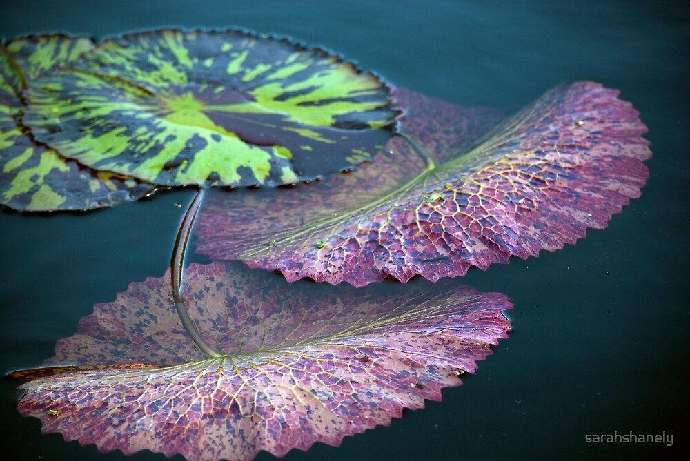 Longwood Gardens - Spring Series 40 by sarahshanely