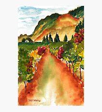September Vineyard Photographic Print