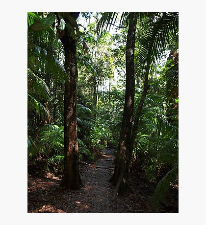 Rainforest Track Photographic Print
