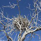 Nest in Dead Tree... von A1000WORDS