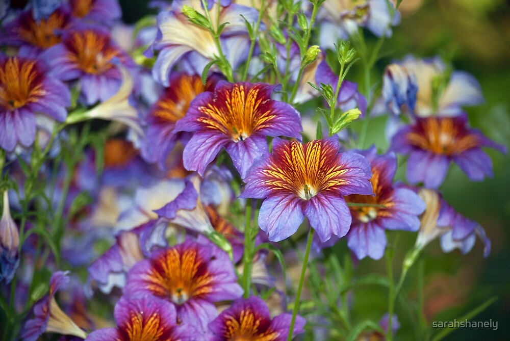 Longwood Gardens - Spring Series 48 by sarahshanely