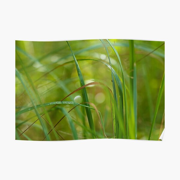 Green Abstract II Poster