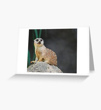 Meerkat Greeting Card