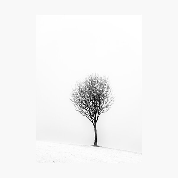 Little Tree Photographic Print