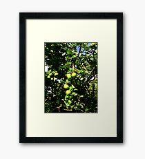 Juicy Apples  Framed Print