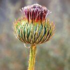 Thorns - Iran by mojgan