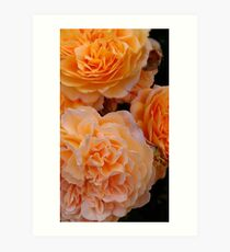 Everything's coming up roses! Art Print