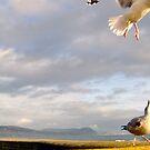 Playfull Seagulls, Lyme Regis-Dorset by Rollergirl