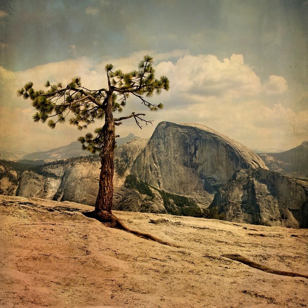 Yosemite: Half Dome from North Dome by dvgcreative