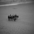Donkeys by James1980