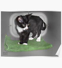 Magic Carpet Kitten Poster