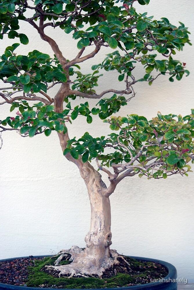Longwood Gardens - Spring Series 60 by sarahshanely