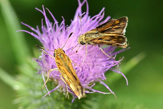 Skippers sharing by William Brennan