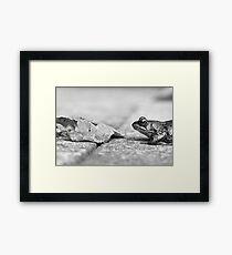 Rana temporaria - Common Garden Frog Framed Print
