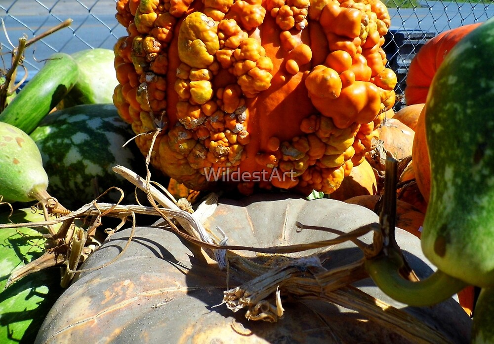 PUMPKINS & GOURDS by WildestArt