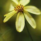 Soft and Yellow by KatsEyePhoto