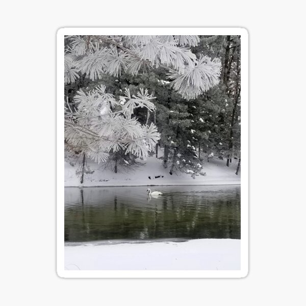 Trumpeter Swan and Hoar Frost Sticker