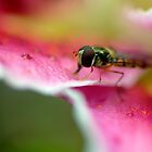 Deep in the Lily by rosie320d