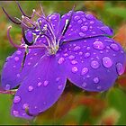 Tibouchina in the rain by Helenvandy