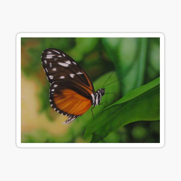 Orange and Orange Butterfly airbrushed art Sticker
