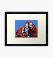 Red Parrots Framed Print