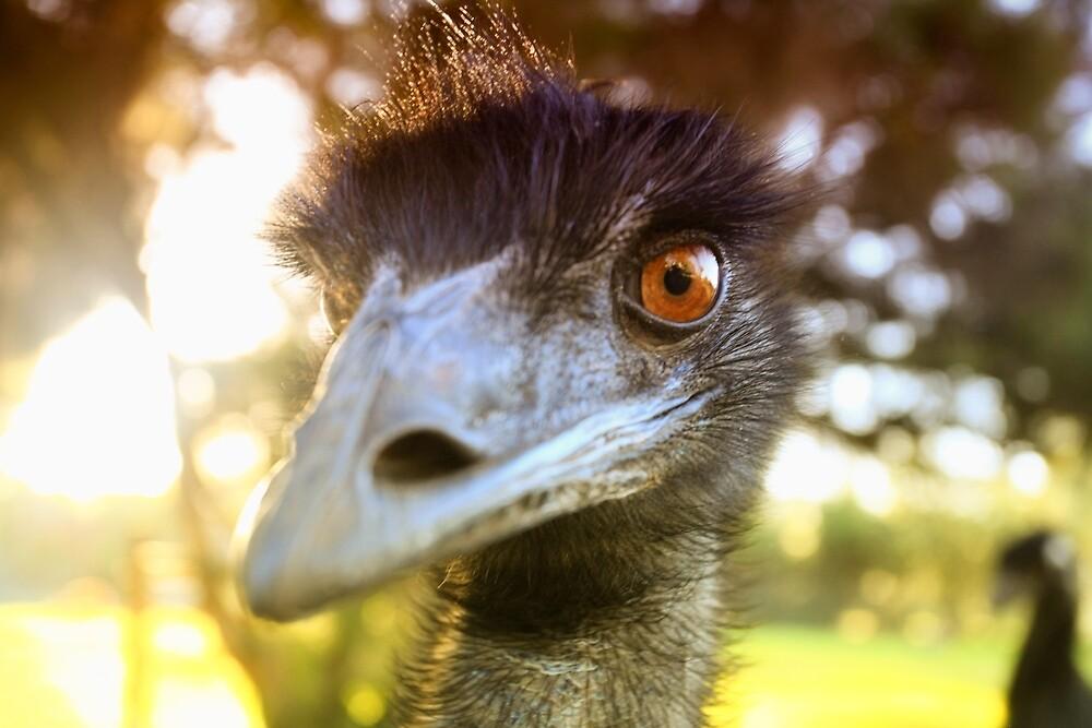 Emu, great Australian icon by Marc Russo