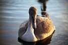 """""""There once was an ugly duckling"""" by Michael Haslam"""
