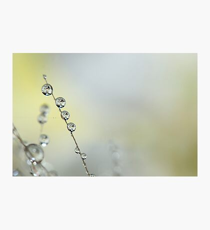 Delicate Blossom Photographic Print