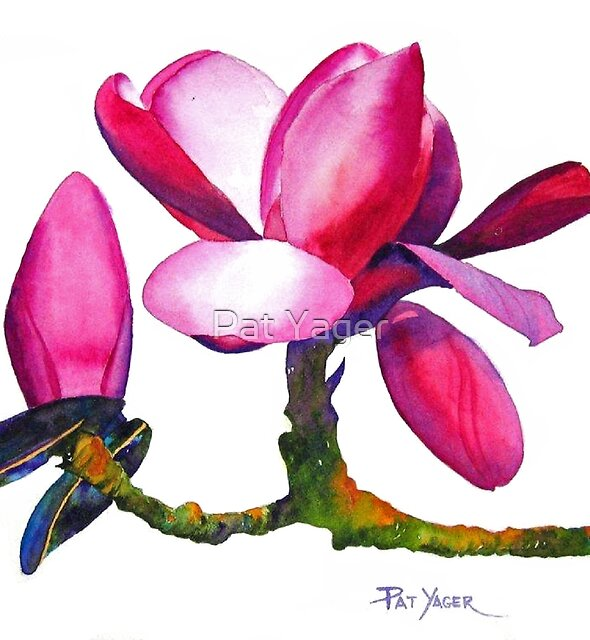 """Marwood Spring"" Magnolia Watercolor by Pat Yager"