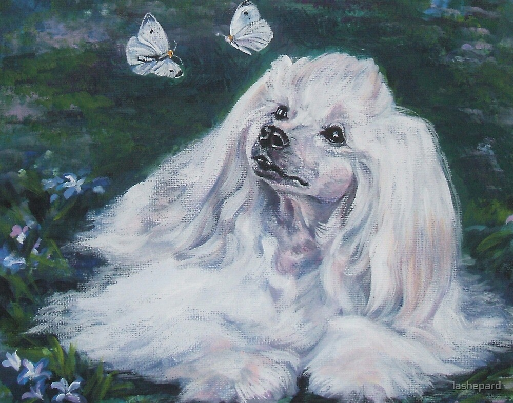 Powderpuff Chinese Crested Fine Art Painting by lashepard