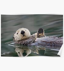 The Waving Sea Otter Poster