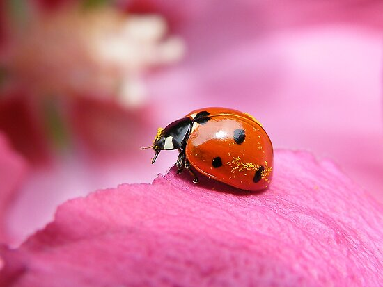 Now ...where can i shake down this pollen... by Yool