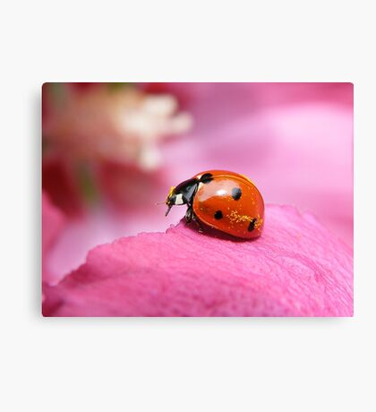 Now ...where can i shake down this pollen... Canvas Print