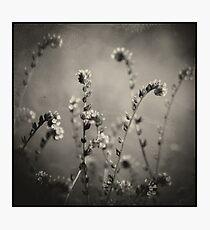 Coterie Photographic Print