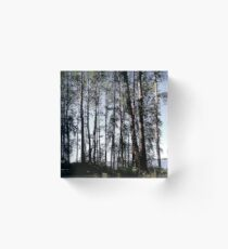 Riverside Trees Acrylic Block