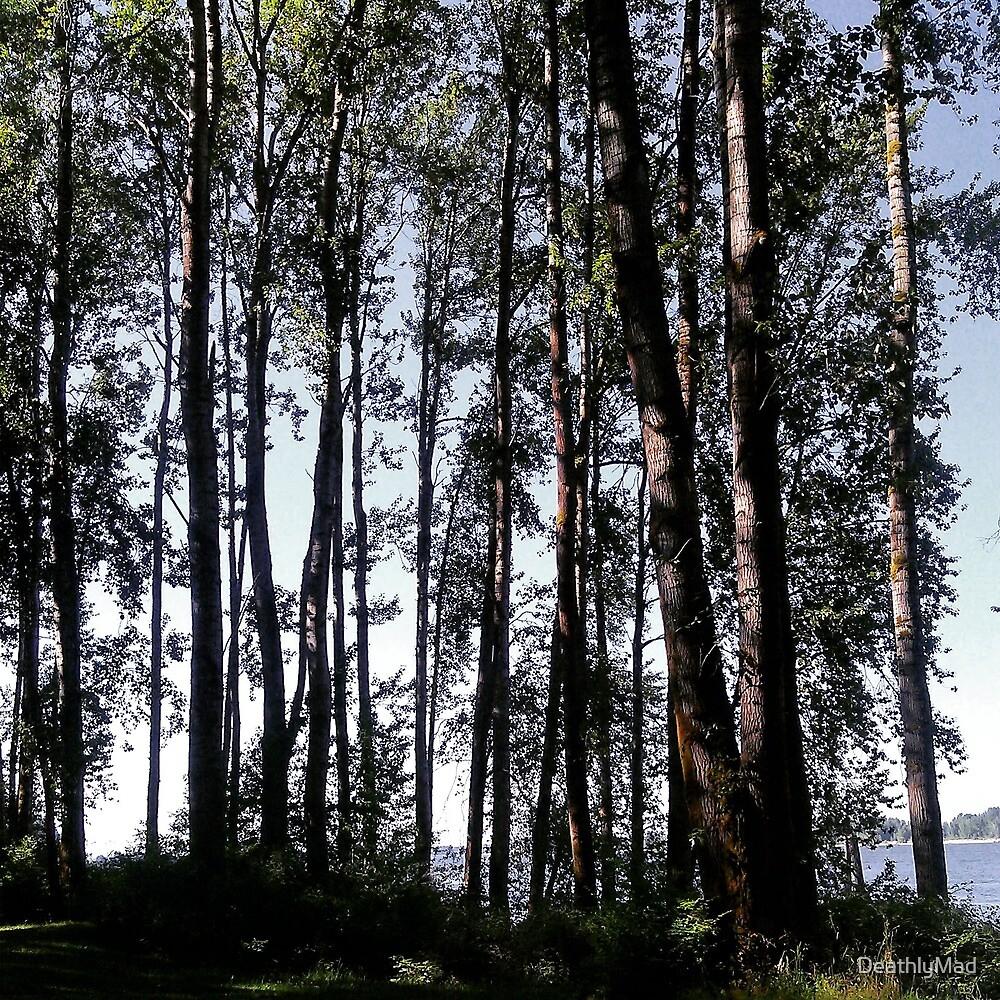 Riverside Trees by DeathlyMad