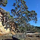 Waimama Bay Lone Rock by Ken Wright