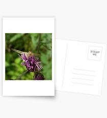 Crab spider Postcards