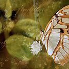 Life Of A Flightless Butterfly by Jak  Savage