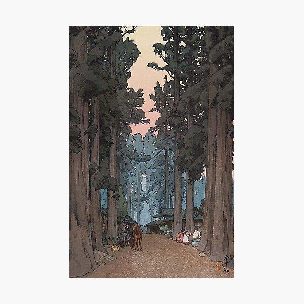 Avenue of Sugi trees - Yoshida Hiroshi Photographic Print