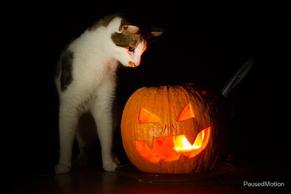 Halloween Pumpkin  by PausedMotion