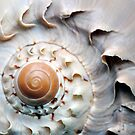 Snaggle-Toothed Shell by MarjorieB