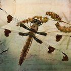 Dragonfly by Karri Klawiter