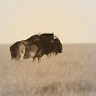 Sepia Wilderbeest by Donald  Mavor