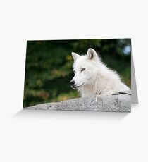 Cry Wolf Greeting Card
